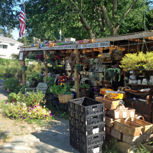 Massachusetts roadside produce stand