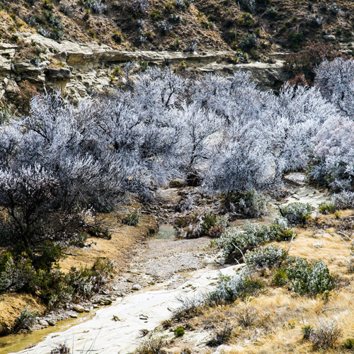 The icy trees of Bell Canyon
