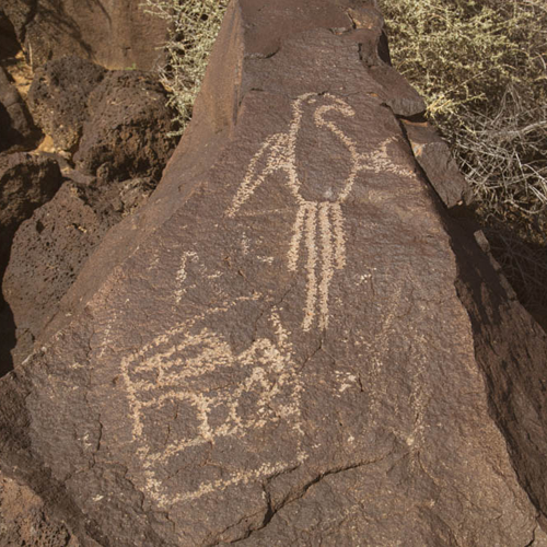 The Macaw Trail is named for this petroglyph