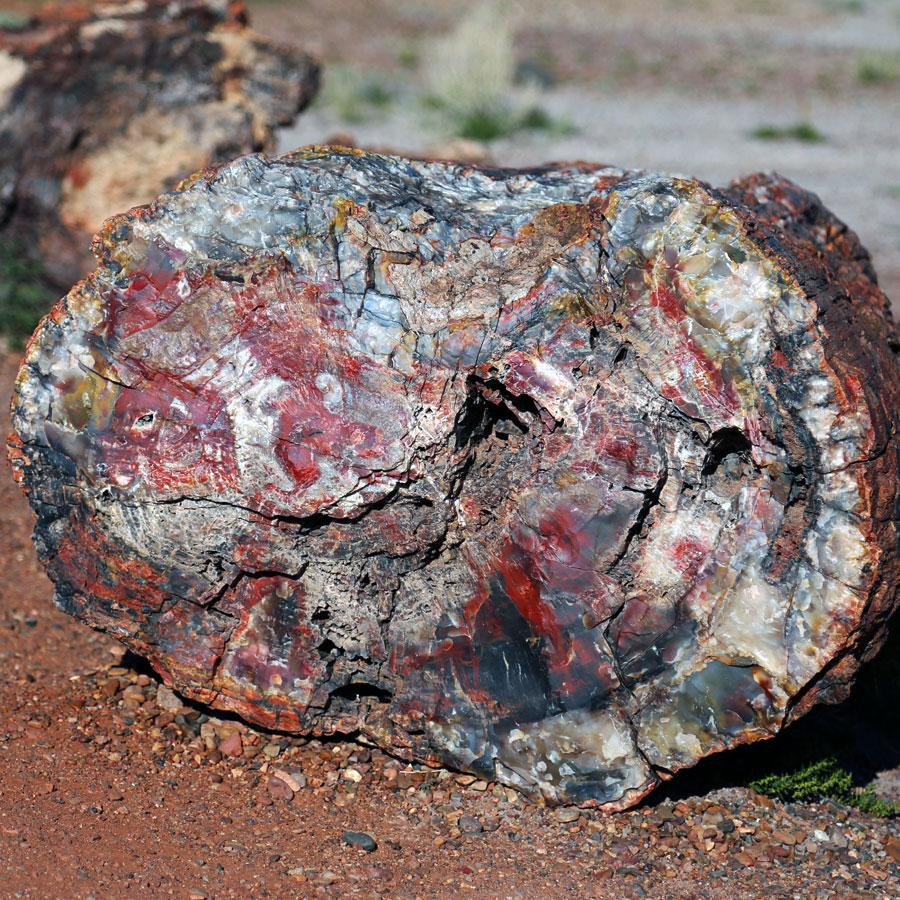 Petrified Forest National Park Petrified Wood