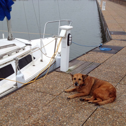 Brownie and her owner's boat